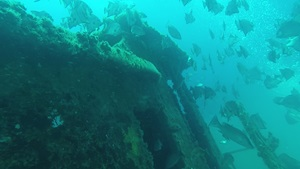 Fish swimming around artificial reef